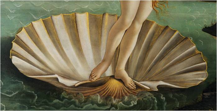 coquillage vénus botticelli